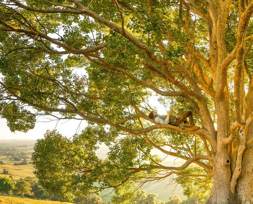 et si votre arbre vous parlait… 18 octobre 2019  à 19 h