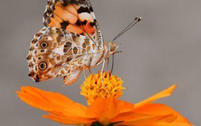 wingwave, tel le battement d'ailes d'un papillon vendredi 13 mars 19h00